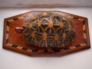 tortoise box (3)