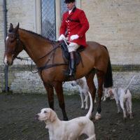 fox hunting (3)
