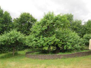 Woolsthorpe Manor (3)