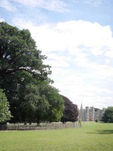 old tree1